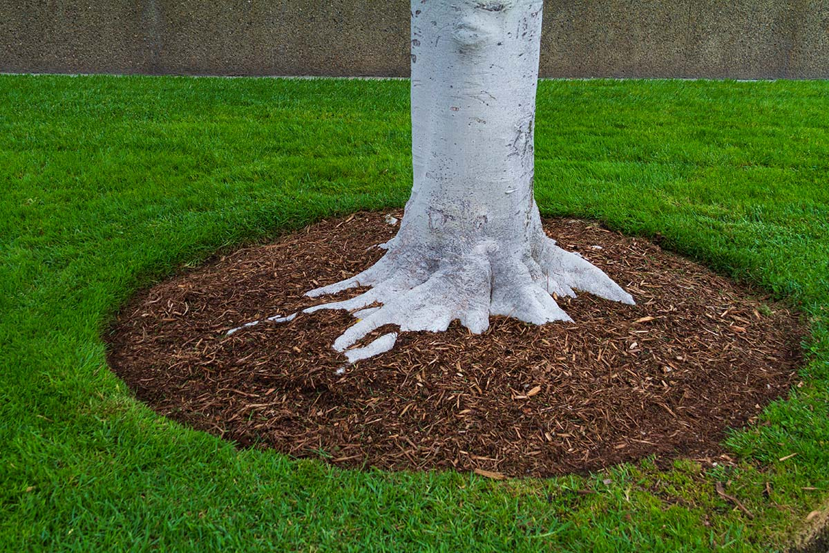 conserve-water-in-summer---tree-foilage