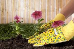 Planting brightly colored flowers, 8 Easy Yard Care Tips to Help Sell Your Home
