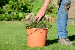 weed flower beds, 8 Easy Yard Care Tips to Help Sell Your Home